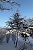 HIVER-2018-51 (pawel_z) Tags: cèdre neige hiver