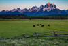 Bison in Grand Teton National Park (Ryan C Wright) Tags: grandtetonnationalpark jackson june mountains nationalpark summer tetons wyoming landscapephotography naturephotography homedecor officedecor fineart visitwyoming gtnp bison buffalo sunrise morning moran horizontal weather bluesky