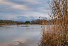 Quietude (Karol ...) Tags: wetlands lagoon laguna landscape reeds wetlandsflora clouds textures water grassblades