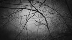 fears and tears (Parchman Kid (Jerry)) Tags: woods forest monochrome fog bw black white sony a6500 wet foggy parchmankid ilce6500 rheinlandpfalz