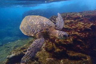 Kauai Hawaii Trip
