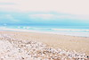 Seashells (Rckr88) Tags: plettenbergbay southafrica plettenberg bay south africa seashells seashell shells shell sea waves wave water ocean coastline coast coastal beach beachsand sand nature outdoors travelling travel westerncape cloudysky clouds cloud