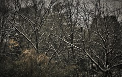 IMG_9021 (olivieri_paolo) Tags: supershots snow branches wild