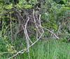 DSC_0478 (H Sinica) Tags: 贊比亞 zambia zimbabwe 津巴布韋 zambeziriver 贊比西河 栗喉蜂虎 bluetailedbeeeater meropsphilippinus