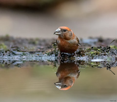 Bird hide (jancphotography.be) Tags: bird birds vogel vogels vogelfotografie birdphotography canon canonphotography nature