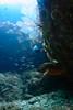 20170709-DSC_7566.jpg (d3_plus) Tags: 南伊豆 漁港 fishingport drive fish port apnea skindiving wideconversionlens 1030mm izu sea 風景 j4 息こらえ潜水 underwater nikon1 景色 uwlh10028m67type2 魚 uwlh10028m67 watersports wpn3 空 静岡 マリンスポーツ japan nikon 静岡県 ニコン ワイドコンバージョンレンズ sky nikonwpn3 ニコン1 水中 ウォータープルーフケース inonuwlh10028m67type2 nikkor inon スキンダイビング nikon1j4 伊豆 2781mm 海 snorkeling ワイコン 素潜り marinesports scenery イノン ズーム 1030mmpd diving shizuoka 日本 1nikkorvr1030mmf3556pdzoom waterproofcase シュノーケリング zoomlense
