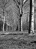 winter contrast (robvanderwaal) Tags: 2018 natuur netherlands winter nature boom nederland laan trees robvanderwaalphotographycom contrast bomen monochrome zwartwit mono zw blackandwhite blackwhite lane bw tree