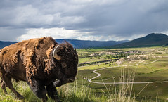 Look Out! (ebhenders) Tags: national bison range charlo montana spring vista hill view red sleep drive