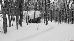 Piste de ski de fond à Duchesnay, Québec, Canada - 0115 (rivai56) Tags: saintecatherinedelajacquesc québec canada saintecatherinedelajacquescartier ca duchesnayenhiver hiver winter skidefond skiing panasonic neige noiretblanc black white crosscountryskiing stationtouristiqueduchesnaycrosscountryskiing duchesnaytouristresort crosscountry ski trail piste de fond à