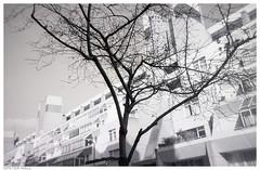Brunswick (peterphotographic) Tags: img009edwm brunswick ©peterhall brunswickcentre london england uk britain city cityscape monochrome tree modernarchitecture architecture contrast xp2 ilford film 35mm analog scanned disposable disposablecamera lomography lomo