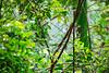 Permai Rainforest Resort (Phalinn Ooi) Tags: santubong kuching sarawak borneo malaysia asia permairainforestresort damai beach pantai sarawakculturalvillage kampungbudaya matangwildlifecentre tamannegara nationalpark kubah wetlands people portrait culture dayak wildlife animals nature outdoor adventure travel wanderlust holiday cuti jalan landmark orangutan flyinglemur proboscismonkey trekking hiking frog safari river boat photography canon eos dslr bokeh macro 5dm4 sape trump iban bidayuh wallace rainforestworldmusicfestival family son wife woman animal forest water tree sexy flora fauna food hotel local treehouse love girl architecture building