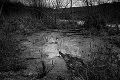 DSC02132 (Distagon12) Tags: nature landscape landshaft paysage mélancolique hiver marais lac lake noiretblanc blackwhite blackandwhite