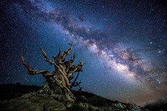 Sony A7RII Astro Photography Milkyway Landscape! Ancient Bristlecone Pine Forest Long Exposure High ISO Night Landscape Photography! Dr. Elliot McGucken Fine Art Photography!  Subtle Light Painting on an Astrolandscape! (45SURF Hero's Odyssey Mythology Landscapes & Godde) Tags: sony a7rii astro photography milkyway ancient bristlecone pine forest dr elliot mcgucken fine art sonya7riiastrophotographymilkywayancientbristleconepineforestdrelliotmcguckenfineartphotography fineart fineartphotography sonya7rii a7r fineartlandscape astrophotography nightphotography astronomy galaxy longexposure night dark tree lightpainting sony1635mmvariotessartfef4zaossemount a7r2 astrometrydotnet:id=nova2454205 astrometrydotnet:status=failed