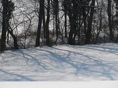 Zimski gozd / Winter forest (Damijan P.) Tags: zima winter sneg snow slovenija slovenia prosenak