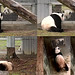 Tian (Psst, Mei...) Mei (I already told you Tian, our time to be together has passed for this year.) Tian (Nose nuzzles then.) Mei (Are you still following me?) Tian (When can we get together?) Mei (What's the use?) 2018-03-07 at 7.54.32–8.05.29 AM