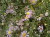 2017-11-09-11856 (vale 83) Tags: bee nokia n8 friends coloursplosion colourartaward
