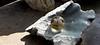 - fragile - (Jac Hardyy) Tags: fragile breakable world ball globe earth glass crystal kristall shine shiny sunbeam steatite soapstone speckstein welt weltkugel kugel globus erde glas glaskugel leuchtend zerbrechlich sonnenstrahl sonnenstrahlen steatit