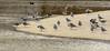 On the waterfront (Wil Molenkamp) Tags: seagull birds nederrijn vogels lente molenkamp arnhem