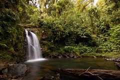One of the magical landscapes in the tropical Rainforest in Costa Rica. (Mario Alberto Salazar Araya) Tags: wildlife wildlifephotography tropical rainforest
