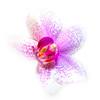 Eternity (FotoCorn) Tags: orchidee orchid perfection eternity flower bloem highkey
