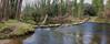 ...i un riu sense pont. (josepponsibusquet.) Tags: samsung mòbil móvil riu ter aigua passera paso pasarela lapilastra pilastra salt bescanó santgregori gironès catalunya catalonia cataluña sensepont sinpuente bosc natura naturaleza faunafluvial samsungs8