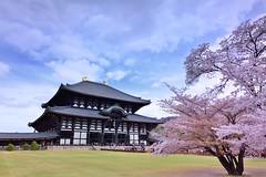 奈良東大寺,とうだいじ (Vincent_Ting) Tags: とうだいじ 東大寺 奈良 櫻花 sakura 世界文化遺產 temple nara cherryblossoms