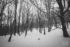 61/365 - Woodland Snow (Forty-9) Tags: photoaday day61 2018 61365 3652018 forty9 365 march blackandwhite trees winter tomoskay bw lightroom efslens canon wenallt snow eos60d project3652018 woodland efs1022mmf3545usm 2ndmarch2018 friday project365 02032018 woods