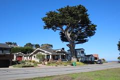 IMG_7601 (mudsharkalex) Tags: california pacificgrove pacificgroveca