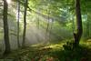 The Garden of Delights (Hector Prada) Tags: bosque luz bruma niebla hojas sol naturaleza forest sun light sunlight mist fog leaves nature árbol tree paísvasco basquecountry