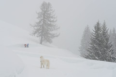Let it snow! (balu51) Tags: winter winterlandschaft schnee winterwanderung wanderer hund kuvasz ungarischerhirtenhund weiss grau hiking dog hiker winterlandscape snow mountains white grey switzerland grisons graubünden surselva märz 2018 copyrightbybalu51