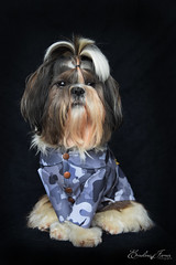 James (EmelineJames) Tags: dog chien animal studio nikon star james militaire army
