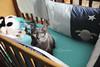 En attendant bébé (Chamaloote & Fabrizio) Tags: chat bébé berceau yeux vert bleu lit barreau animal félin