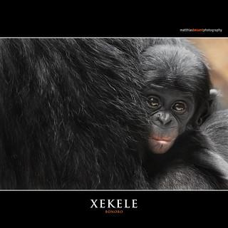 XEKELE