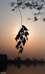 20180309-IMGP4015 (Huu ND) Tags: silhouette leaf sun sunset city lake closeup k3 pentax