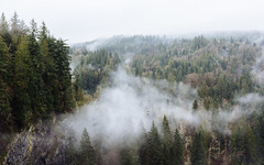Dance Amongst The Trees (John Westrock) Tags: trees clouds nature landscape overcast cloudy moody snoqualmiefalls washingtonstate pacificnorthwest canoneos5dmarkiii canonef2470mmf28lusm