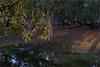 moods of keoladeo - ix (nevil zaveri (thank U for 15M views:)) Tags: zaveri nature landscape tree trees rajasthan india images stockimages nevil nevilzaveri stock photo water lake reflection leaves birds sanctuary national park np wilderness blog spotbilled keoladeo wildlife sunset
