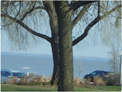 Copy Cat Trees ... (Irene, W. Van. BC) Tags: copycattrees trees treesilhouettes treebranches treesinmist lakeshore green grass greenleaves greenery branches water waterscenes boats beautifulnature outdoors outdoorscenes 1001nights 1001nightsmagiccity car cars alltrees beautifultrees canoe paddling 1001nightsmagicwindow
