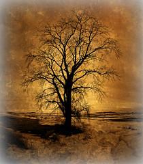 A Big Old Tree (Dave Linscheid) Tags: tree snow winter silhouette creek stream textured mn minnesota usa country rural picmonkey texture grunge watonwancounty butterfield fiseyelens 8mmrokinonlens