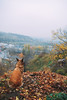 expectation (YellowTipTruck) Tags: kyiv expectation dog nature park autumn leaffall visibility