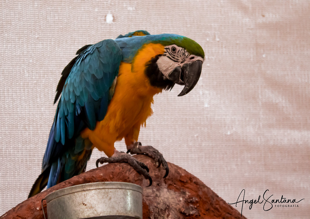 Aves Selva Viva Angel Santana Fotografia Tags Biobio Concepcion Selvaviva Aves Animales