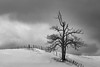Crann Bethadh (Bert CR) Tags: fishing saintpatricksday irish treeoflife blackandwhite blackwhite blackandwhitelandscape monochrome bw brucecounty tree farm skancheli clouds