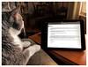 Hmmm.. (Timothy Valentine) Tags: 2018 hitech quinnomannion happycaturday 0318 home cat datesyearss eastbridgewater massachusetts unitedstates us