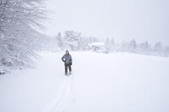 Snowshoeing out back - Tenants Harbor Maine (Jonmikel & Kat-YSNP) Tags: maine tenantsharbor me stgeorge oldwoodsfarm farmhouse stgeorgepeninsula midcoastmaine noreaster winter snow wetsnow march backyard woods field barn