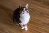 _NCL3482-Edit (chitoroid) Tags: nikond750 nikkor50mmf18g japan hokkaido sapporo cat