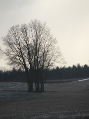 """Photo Series: Travel in Ontario: """"April barrenness"""" (Ken Whytock) Tags: april ontario isolation spring cold weather"""