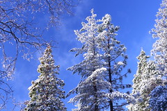 IMG_7616 (qorp38) Tags: snow trees sky blue postcard