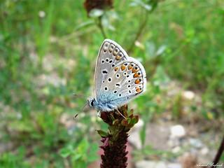 Butterfly 1621