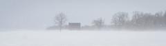 Groveland, NY (-dangler) Tags: dandangler winter wny livingstoncounty outdoors outside snow snowing weather rural country usa old barn tree ny nys newyork groveland
