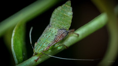 Ass to the moon (Luca Macrofotografia) Tags: insects luca macro