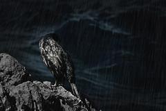 Guarecerte en tu propia piel - Amparo García Iglesias (Amparo Garcia Iglesias) Tags: lluvia dias olas mar ave oscuridad agua fotos photos amparo garcia iglesias guarecerse birds rain